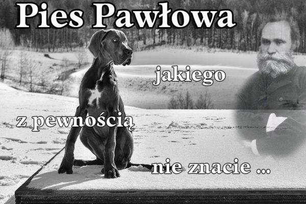 Pies Pawłowa jakiego nie znacie